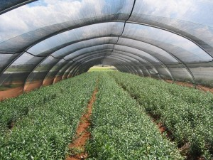 plase agricultura