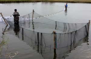 obor pescaresc