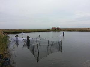 obor pescaresc 2